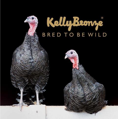 Kelly Bronze, de ultieme kerstkalkoen
